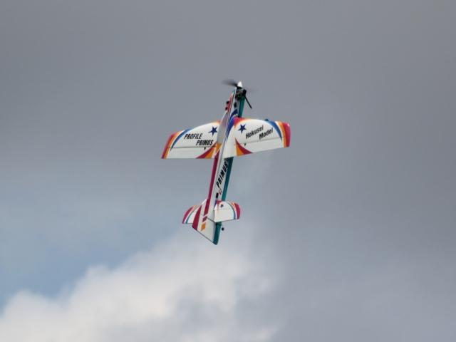 skywing_05.jpg